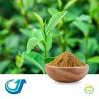 Green Tea Extract Powder by Tianjiang