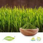 Organic Barley Grass Powder by Comext