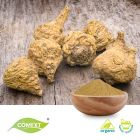 Organic Maca Extract 10:1 by Comext