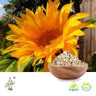 Organic Sunflower Seed Kernel by Qimei Industrial Group