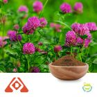 Red Clover Extract 4:1 TLC by Hongda