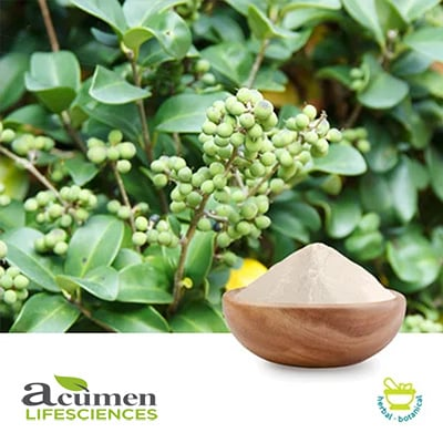 Guggul Extract 10% Guggulsterones UV by Acumen Lifesciences