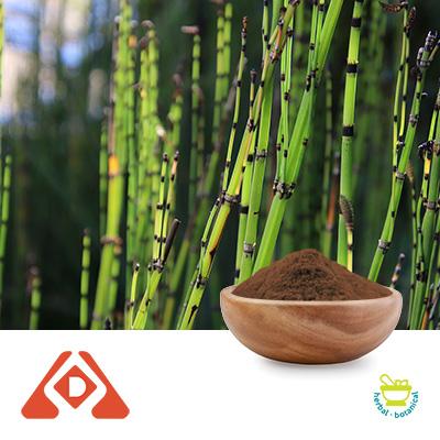 Horsetail Extract 5:1 TLC by Hongda