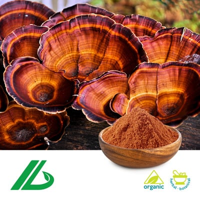 Organic Reishi Shell-broken Spore Powder (25kg Drum) by Xian Laybio Natural Ingredients Co., Ltd