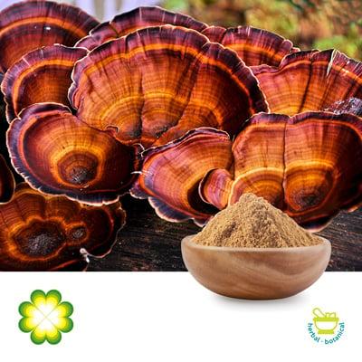 Reishi Mushroom 10% Polysaccharides by Rainbow