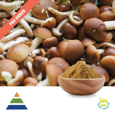 Agrocybe Aegerita Mushroom Extract 30% Polysaccharides UV (25kg Drum) by Shaanxi Kingsci Biotechnology Co., Ltd
