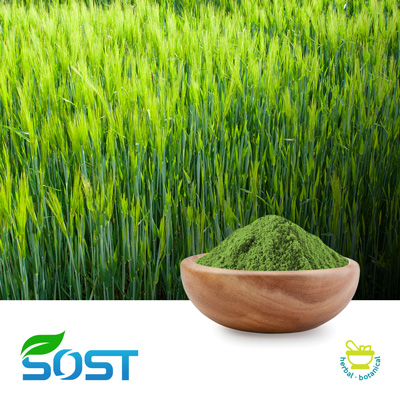 Barley Grass Powder by Xi An Sost Biotech Co., Ltd