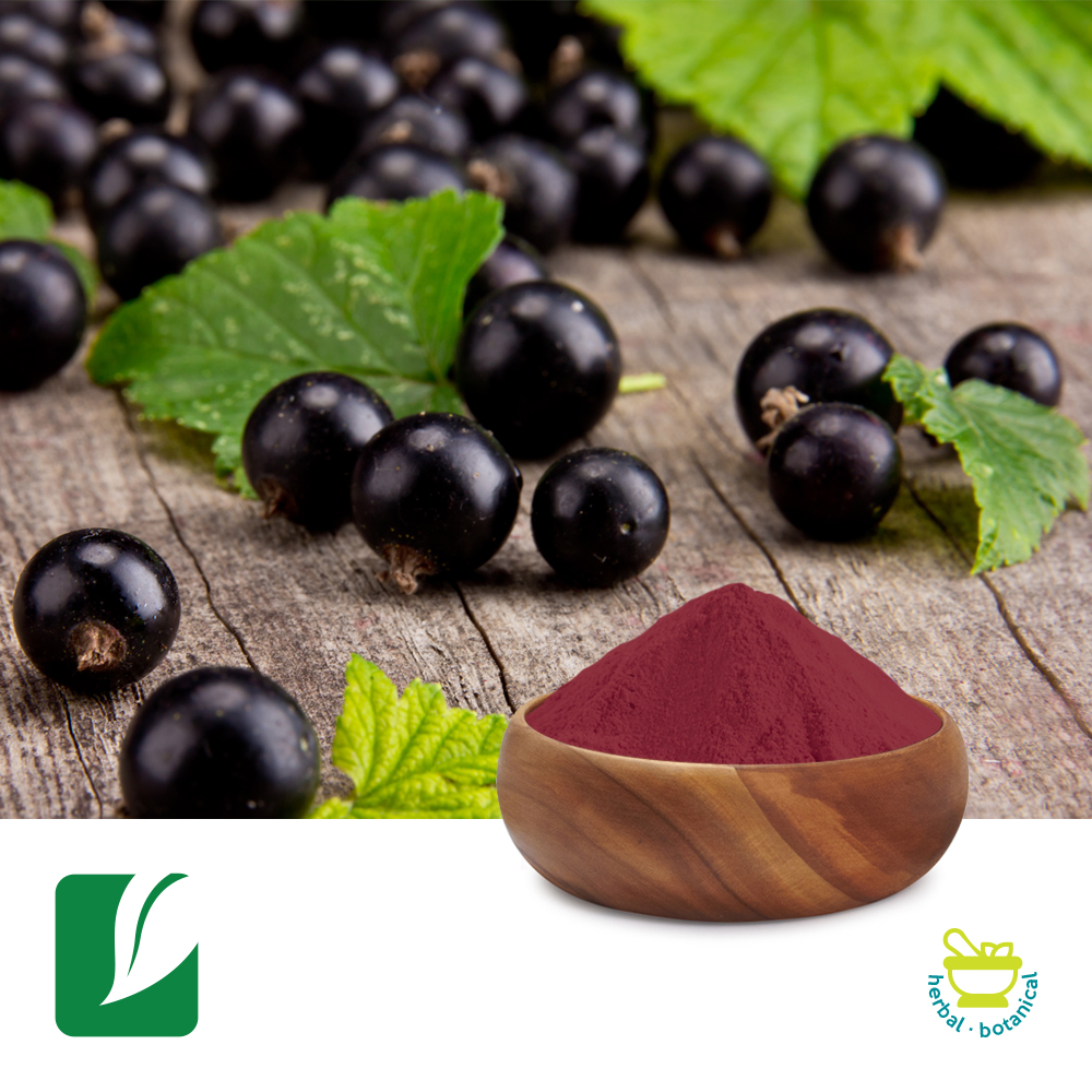 Black Currant Fruit Powder by Longze Biotechnology