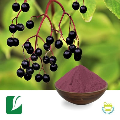 Black Elderberry Extract 10:1 by Xi'An Longze Biotechnology Co.,Ltd