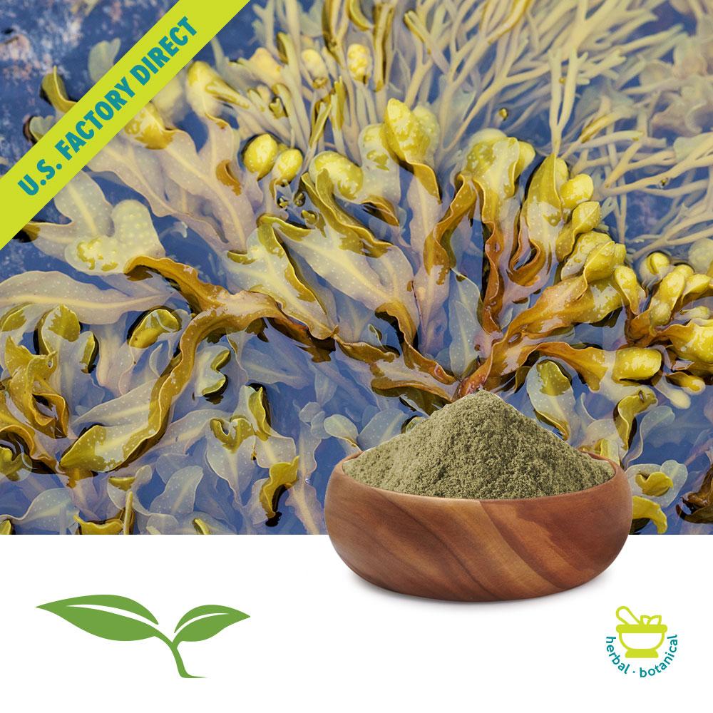 Bladderwrack Powder (Wildcrafted) by American Botanicals