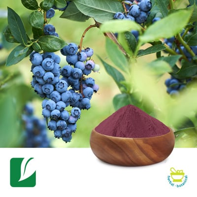 Blueberry Fruit Powder by Longze Biotechnology