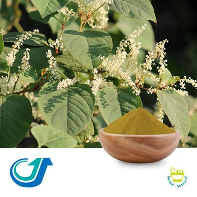 Bushy Knotweed 15:1 Full-Spectrum Extract by TianJiang