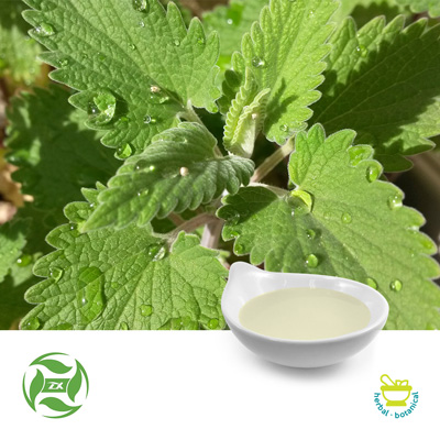Catnip Oil (25kg Drum) by Ji'An Zhongxiang Natural Plant Co., Ltd