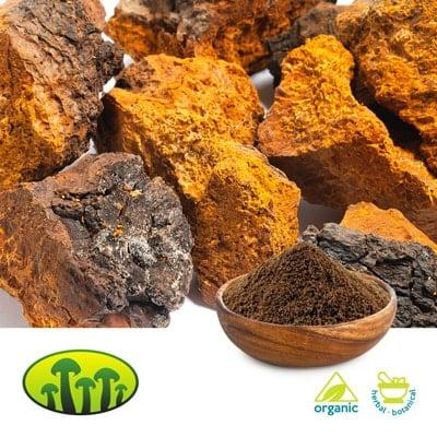 Organic Chaga dual extract 8:1 by Zhejiang Biosan Biotech Co., Ltd.
