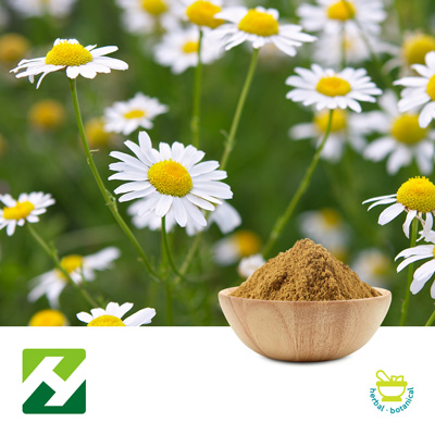 Chamomile Extract 10:1 (25kg Drum) by Organic Herb Inc.