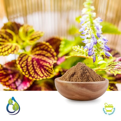 Coleus Root Powder by S.A. Herbal Bioactives Llp