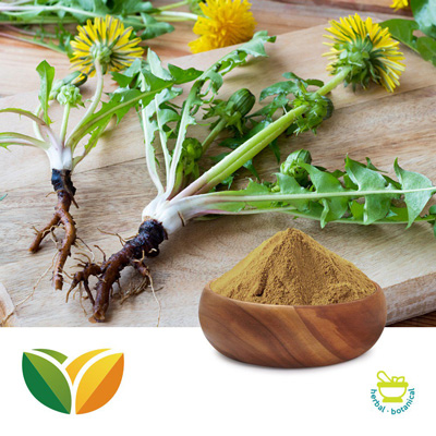Dandelion Root Powder by Tianhua Pharmaceutical