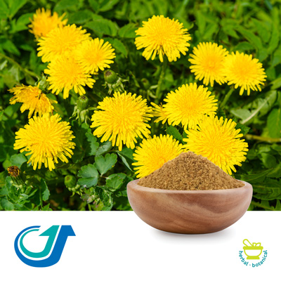 Dandelion 8:1 Full-Spectrum Extract by Tianjiang Pharmaceutical Co., LTD.