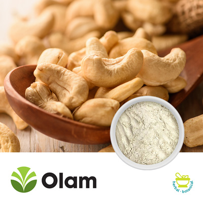 Defatted Cashew Protein Powder by Olam