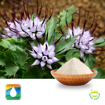 Devil's Claw Root Extract 2.5% harpagosides HPLC by Monteloeder