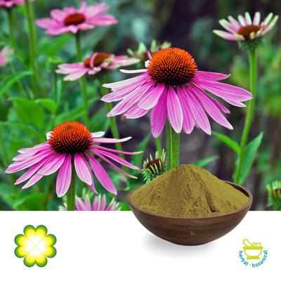 Echinacea 4% Chicoric Acid  HPLC by Rainbow