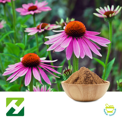 Echinacea Purpurea Extract 4% Polyphenols UV (25kg Drum) by Organic Herb Inc.