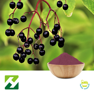 Elderberry Extract 4:1 (25kg Drum) by Organic Herb Inc.