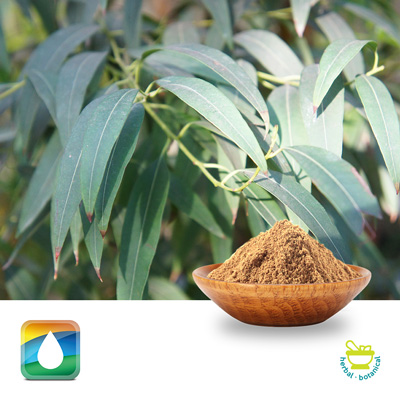 Eucalyptus Extract 4:1 by Monteloeder