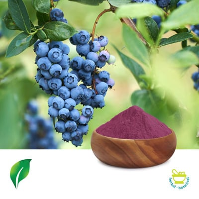 European Bilberry Extract 10:1 by Sunnycare