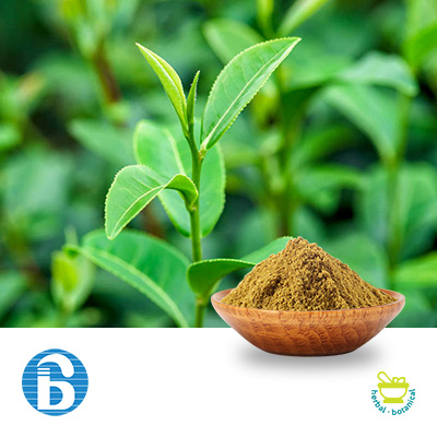 Green Tea Extract 50% Polyphenols by BannerBio