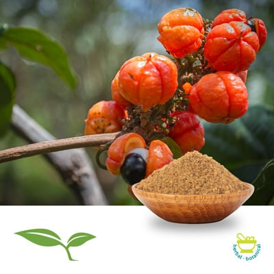 Guarana Seed CFP by American Botanicals