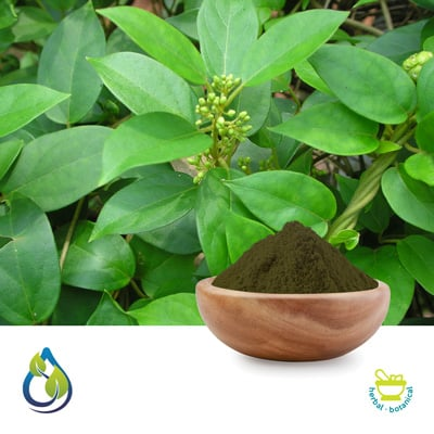 Gymnema Sylvestre Powder by S.A. Herbal Bioactives Llp