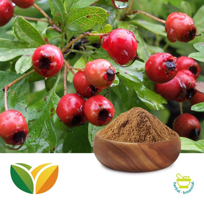 Hawthorn Berry P.E. 5:1 by Shandong Tianhua Pharmaceutical Co., Ltd.