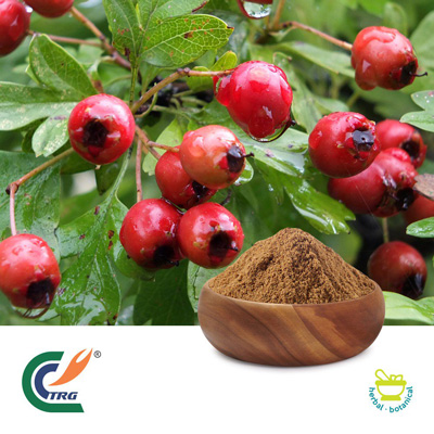Hawthorn Berry P.E.5:1 by Hanzhong Trg Bioctech Co., Ltd.