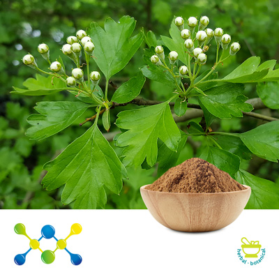 Hawthorn Leaf Extract 2% Vitexin (Irradiated) by Shaanxi Undersun Biomedtech Co., Ltd