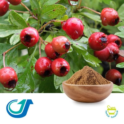 Hawthorn Fruit 3:1 Full-Spectrum Extract by TianJiang