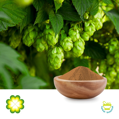 Hops Extract 8% Flavones by Rainbow