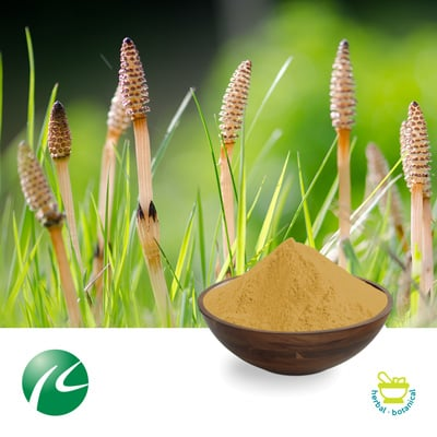 Horsetail Extract 10:1 by Hua Kang Biotechnology