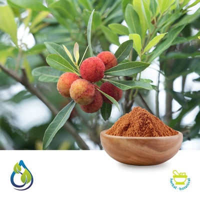 Myrica esculenta (Kaiphal) powder Steam treated by S.A. Herbal Bioactives Llp
