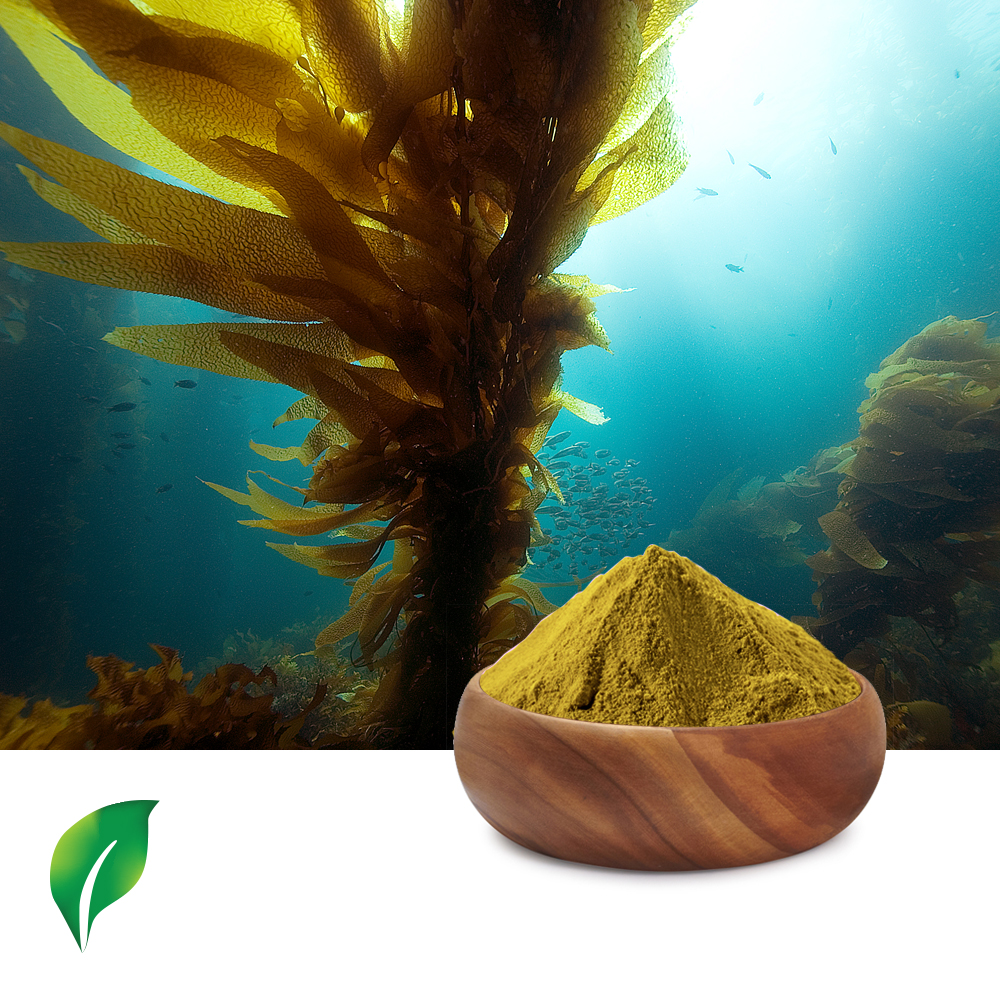 Kelp Extract 5:1 by Changsha Sunnycare Inc