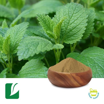 Lemon Balm Extract 5:1 by Longze Biotechnology