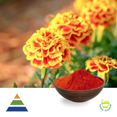 Lutein Esters 10% Powder by Shaanxi Kingsci Biotechnology Co.,Ltd