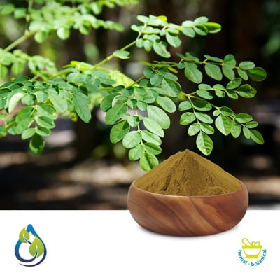 Moringa Oleifera Extract 20% by S.A.HerbalBioactives