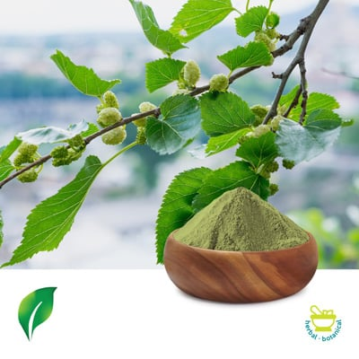 Mulberry Leaf Extract 5:1 by Sunnycare