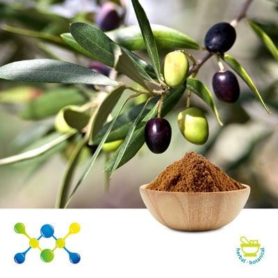 Olive Leaf  P.E. 10% Oleuropein (Irradiated) by Undersun Biomedtech