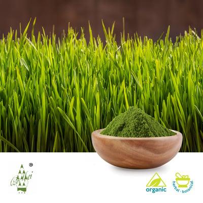 Organic Barley Grass Powder by Qimei Industrial Group Co.,Ltd