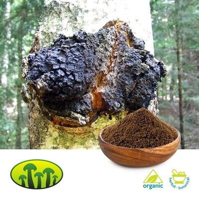 ORG Chaga Powder 3% Polysaccharides by Zhejiang Biosan Biotech Co., Ltd.