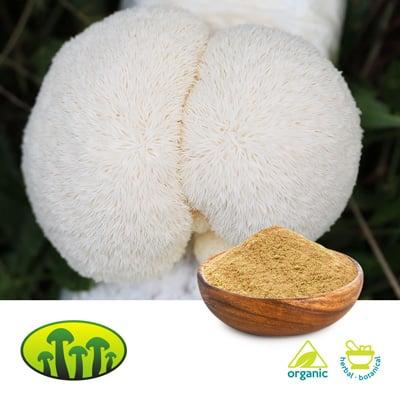 ORG Lion's mane dual extract 8:1 by Zhejiang Biosan Biotech Co., Ltd.