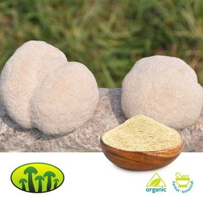 ORG Lion's mane extract 8:1 by Zhejiang Biosan Biotech Co., Ltd.