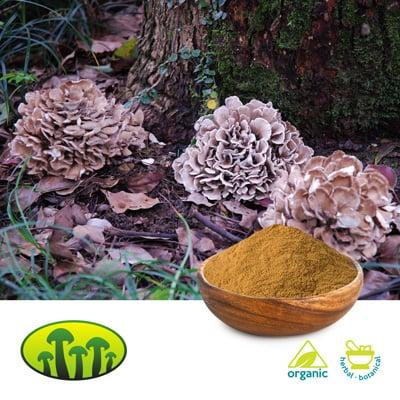 ORG Maitake 8:1 extract by Zhejiang Biosan Biotech Co., Ltd.